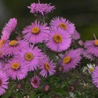 Последние осенние цветы. :: Paparazzi