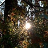 Как-то утром в зимнем,сумеречном лесу :: Сергей Землянский