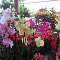 Орхидеи по пути в Эйн Геди в маленькой оранжерее :: Герович Лилия