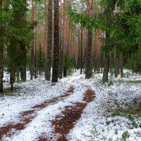 Сосновый бор в декабре :: Милешкин Владимир Алексеевич