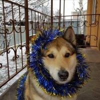 К Новому году готов! :: LORRA ***