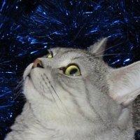 Кот в мишуре :: OLLES