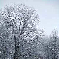 Начало зимы :: Андрей Хомяков