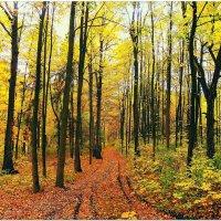 Осень... :: Евгений Кочуров