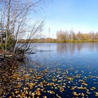 Желтые листья на синем льду. :: Oleg S