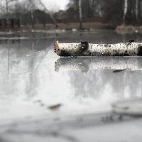 на тонком льду :: Дарья Садовникова