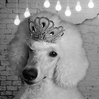 белая королева :: Татьяна Малафеева