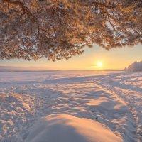 Морозное утро :: Дамир Белоколенко