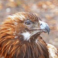 Гордый птиц :: Александр Запылёнов