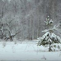 На лесной поляне! :: Владимир Шошин
