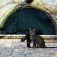 Коты :: Ольга Зубова
