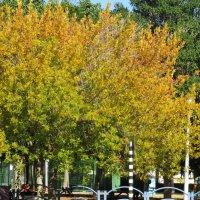 Осень в Ашкелоне :: Герович Лилия