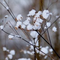 зимняя флора 3 :: Александр Прокудин