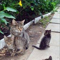 Мама и дети :: Нина Корешкова