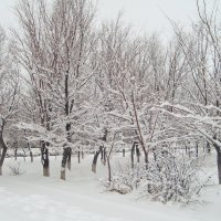 зима :: vladimir polovnikov