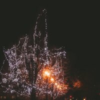 новогодние деревья :: Ольга (Кошкотень) Медведева