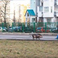 """""""Извини, что опоздала - долго автобус ждала..."""" :: Владимир Безбородов"""