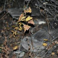 Растение ночью :: Евгений Меринов