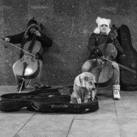 Пьеса для двух виолончелей и собаки :: Александр Степовой