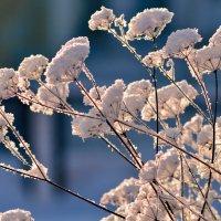 цветы зимы :: Евгений Фролов
