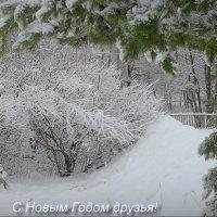 В Загородном! :: Владимир Шошин
