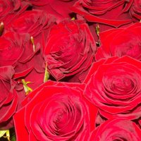 Букет роз :: нина