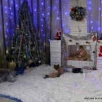 в смысле год собаки!?!!!! :: Ольга Оригана Ваганова