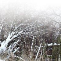 После снегопада :: Денис Масленников