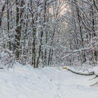 Когда выпал снег :: Юрий Стародубцев
