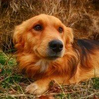 Желтая Земляная Собака :: Сергей Шаталов