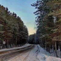 Зимние картинки в Новогодние каникулы. :: Пётр Сесекин