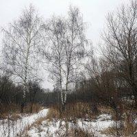 Зима 2018, какая она есть. :: Юрий Шувалов