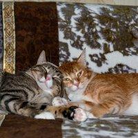 Рыжик и Малыш :: Сергей Бойко