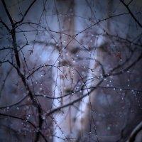 Зимний дождь :: Михаил Сазонов