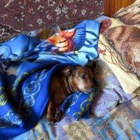Собакам тоже нужен отдых :: Ирина ***