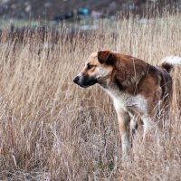 Собака в поле :: Ярослав Адамов