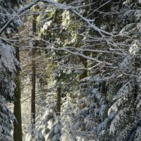 В зимнем лесу :: Mariya laimite