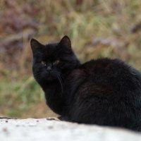 Жил да был чёрный кот. :: Анатолий. Chesnavik.
