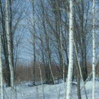 Приближение весны. :: Михаил Михеев