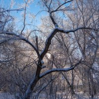 Однажды зимой. :: Elena Sartakova