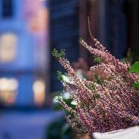 Зимние цветы. :: Татьяна