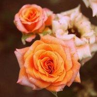 Цветочки :: Анастасия