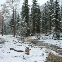 Зимний лес :: Николай Танаев