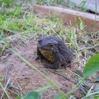Царевна - лягушка или просто жаба :: Анна Воробьева
