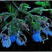 Засыпающая медуница :: Нина Корешкова
