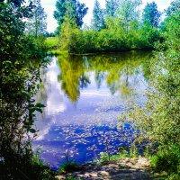 Пруд - прекрасное место для купания и рыбалки! :: Александр Куканов (Лотошинский)