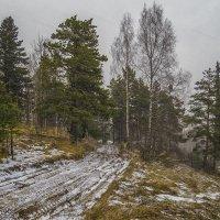 Ненастье лесной  дороги :: Сергей Цветков