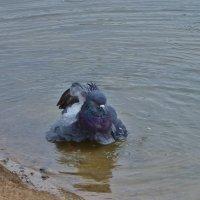 Вот научусь плавать и на море полечу . :: Святец Вячеслав