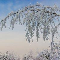 Склонилась под тяжестью снега :: Владимир Волосовский