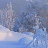 Морозное утро. :: Владимир Стаценко